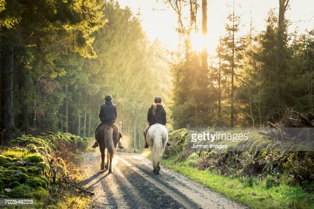 horseback riding - horseback riding stock pictures, royalty-free photos & images