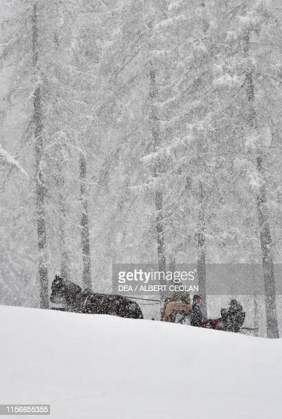 Horsedrawn cart in a forest during a snowfall Fischleintal Valley TrentinoAlto Adige Italy