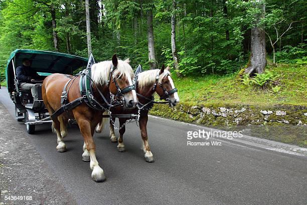 Horse-drawn coach