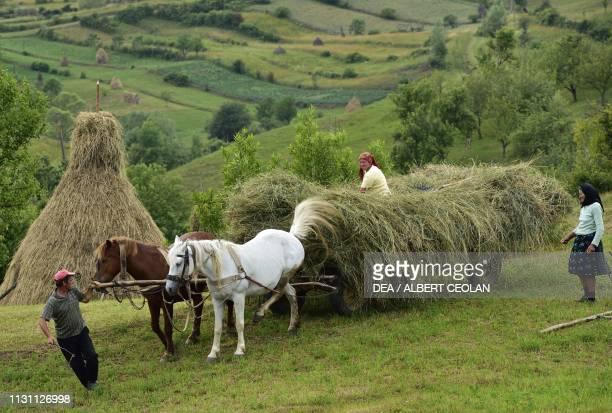 Horsedrawn hay cart Calinesti Romania
