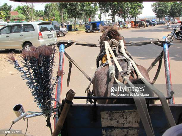 horsedrawn - hairy bum stock pictures, royalty-free photos & images