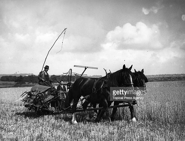 A horsedrawn reaper during the harvest in a field in Kent