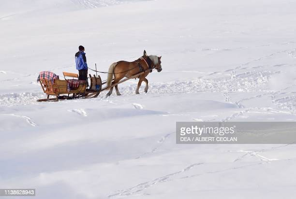 Horsedrawn sleigh on the snow in Compatsch Seiser Alm TrentinoAlto Adige Italy