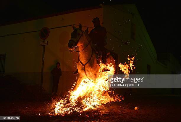 TOPSHOT A horseman jumps over a bonfire during the celebrations of the traditional religious festival Luminarias in honour of San Antonio Abad patron...