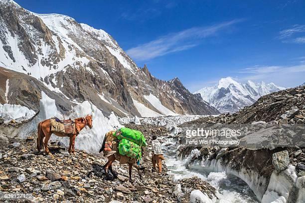 horseman on godwin-austen glacier, k2bc to concordia, central karakoram national park, gilgit-baltistan, pakistan - k2 mountain stock pictures, royalty-free photos & images