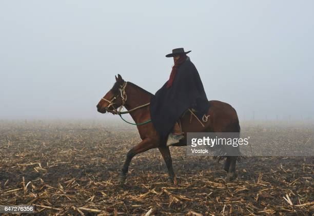 Horseman on the vineyards in Chile