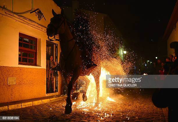 A horseman rides over a bonfire during the celebrations of the traditional religious festival Luminarias in honour of San Antonio Abad patron saint...