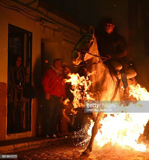 A horseman rides through a bonfire during the celebrations of the traditional religious festival Luminarias in honour of San Antonio Abad patron...