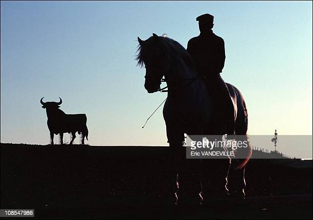 Horseman training in the plains of Andalusia Behind an Osborne Toro a famous advertisement for a Spanish alcoholic beverage in Spain in January 2000