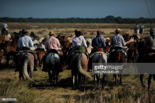 Horsemen ride during the annual Saca de las Yeguas at Donana National Park on June 26 2018 Annually in late June large herds of freeroaming horses...