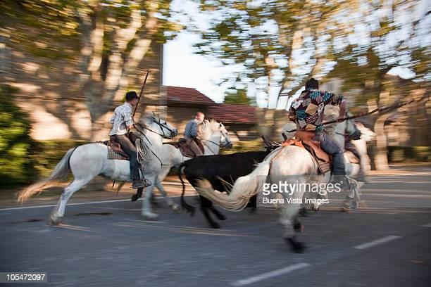 Horsemen with bull in Arles