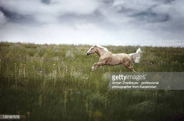 horsepower - one animal stock pictures, royalty-free photos & images
