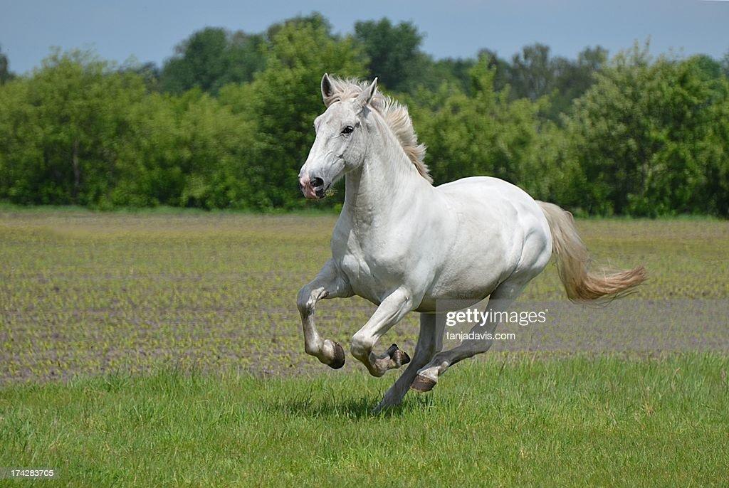 Horsepower : Stock Photo