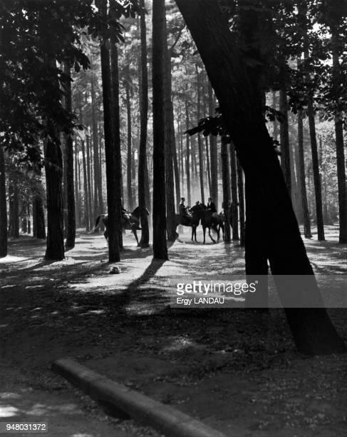 Horseriders on a stroll in the forest Cavaliers en promenade dans la forêt
