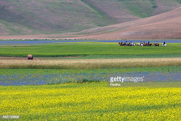 horseriders on piano grande di castelluccio (italy) - umbria stock pictures, royalty-free photos & images