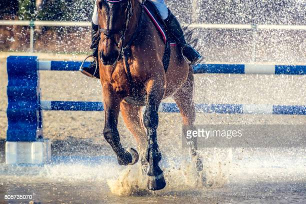 horseriding through a water curtain - hurdling horse racing stock pictures, royalty-free photos & images