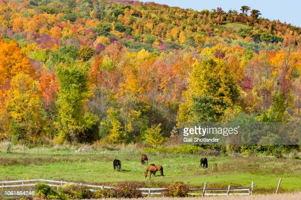 Horses and Autumn Hill