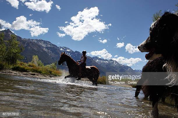Horses and dogs cool off in a watering hole during the 50th Anniversary Glenorchy Race meeting The races which originally started in the 1920's were...