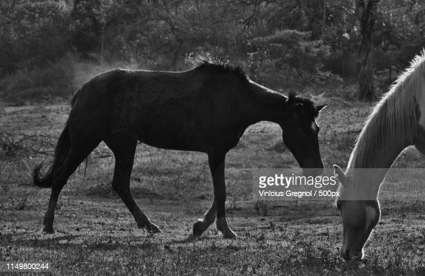 horses and dust - gregnol fotografías e imágenes de stock