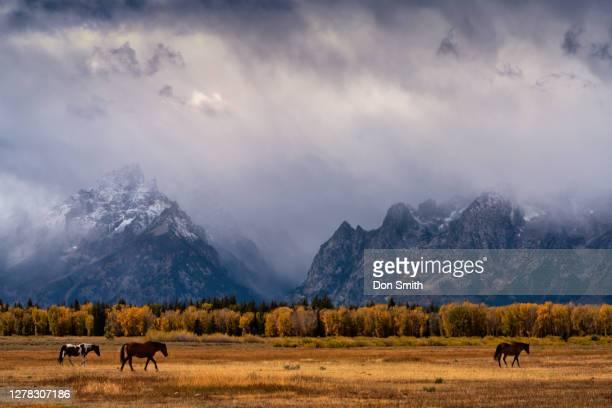 horses and grand teton range - don smith stockfoto's en -beelden