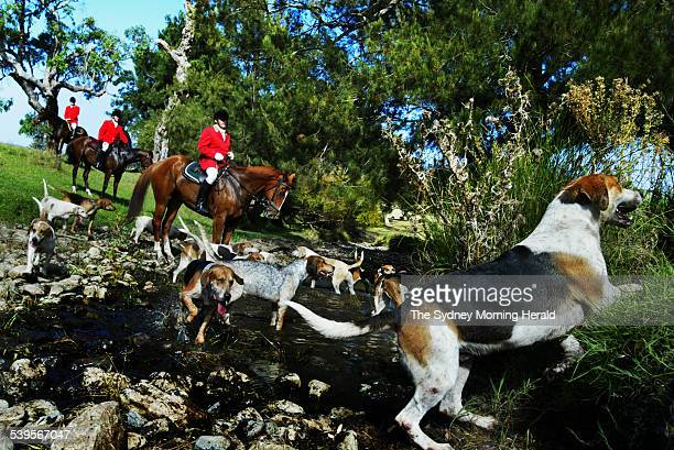 Horses and hounds at the property of Thornthwaite in Scone during a Fox Hunt on 12 April 2005 SMH NEWS Picture by BRENDAN ESPOSITO