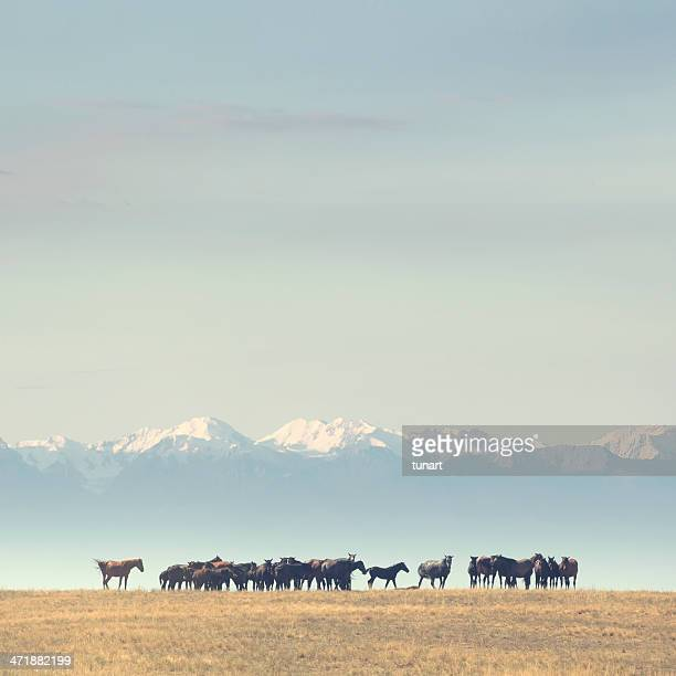 horses and tian shan mountains, kyrgyzstan - kyrgyzstan stock pictures, royalty-free photos & images