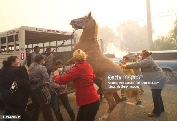 Horses are evacuated at Castle Rock Farms as the Easy Fire approaches on October 30 2019 near Simi Valley California
