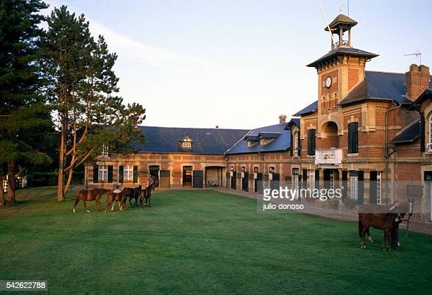Horses are led to their stalls at the farm of the prominent French banker Baron Guy de Rothschild