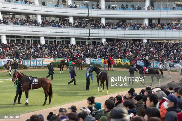 Horses are paraded around the paddock prior to a race at the Nakayama Racecourse on December 28 2014 in Funabashi Chiba Japan More than 115000 people...