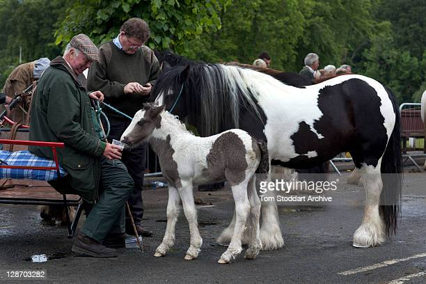Horses are paraded on a street during the annual Appleby Horse Fair near the River Eden Appleby Cumbria 5th June 2011 The event is one of the oldest...