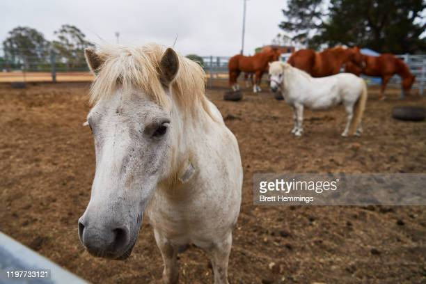 Horses are pictured at the Moss Vale Showground after being evacuated from their property on January 06 2020 in Moss Vale Australia Cooler conditions...