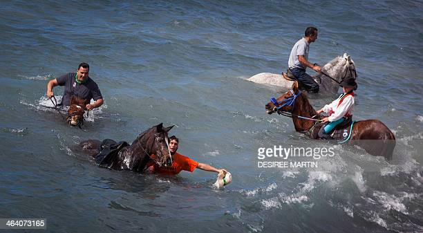 Horses are ridden into the surf at la Enramada beach along the southern Adeje coastline on the Canary island of Tenerife on January 20 2014 during...