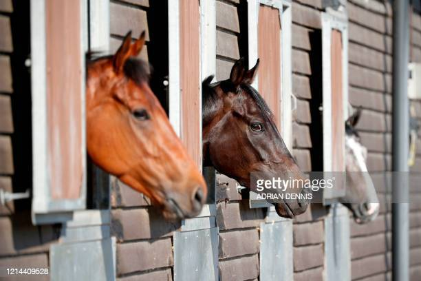 Horses are seen at racehorse trainer George Baker's stables near Haslemere, south of London, on May 21, 2020. - Horse Racing leader's are working...