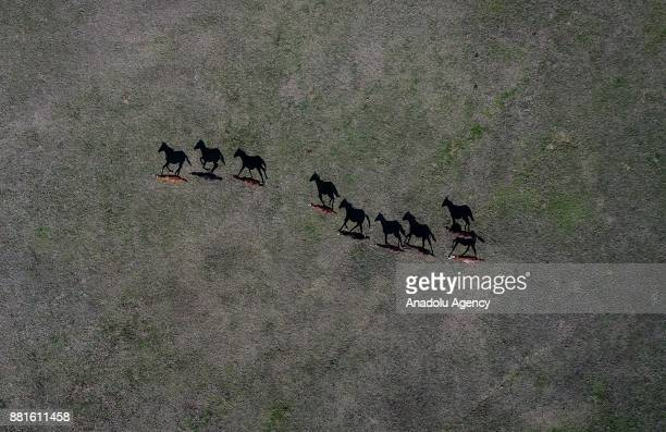 Horses are seen at TGEM's Karacabey Agricultural Farm's stud in Bursa Turkey on November 29 2017 Arabian and British horse breeds are being bred in...