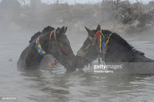 Horses are seen in a thermal spring at temperatures around 40 degrees centigrade in the village of Budakli in Guroymak district Bitlis Turkey on...