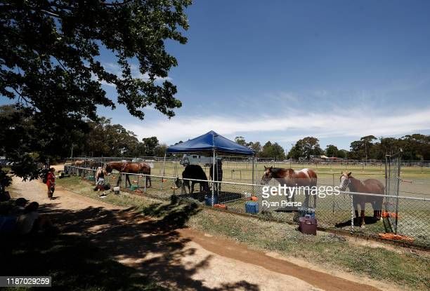 Horses are seen in enclosures at the Animal Evacuation Area at French's Forest Showgrounds on November 12 2019 in Sydney Australia More than 50 fires...