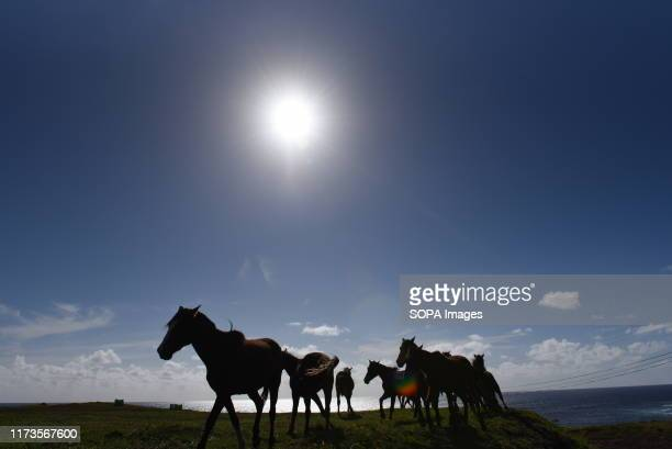 Horses are seen on the Vernal Equinox day near the small village of Hanga Roa The population of wild horses on Easter Island also known as Rapa Nui a...