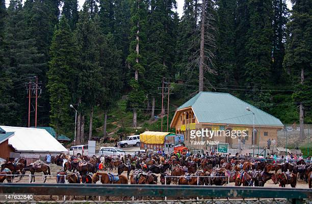 Horses are seen waiting for tourists on July 02 2012 in Gulmarg in the Baramula district of Jammu And Kashmir India Located 54 km to the west of...