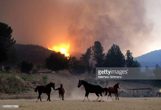 Horses are spooked as the Woolsey Fire moves through the property on Cornell Road near Paramount Ranch on November 9 2018 inAgoura Hills California...
