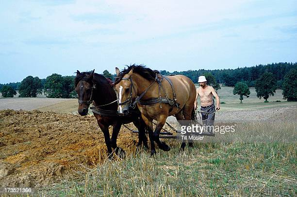 Horses are still in use in some parts of Poland. But this way of agriculture work is getting rarer and rarer because of investations and...