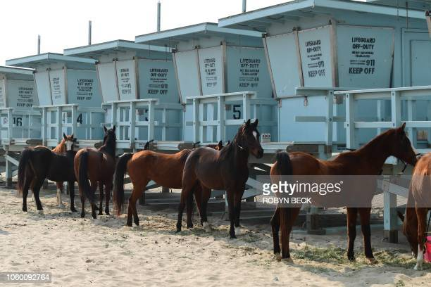 Horses are tied up at lifeguard stations on Zuma Beach brought there by their owners to escape the Woolsey Fire in Malibu California November 10...