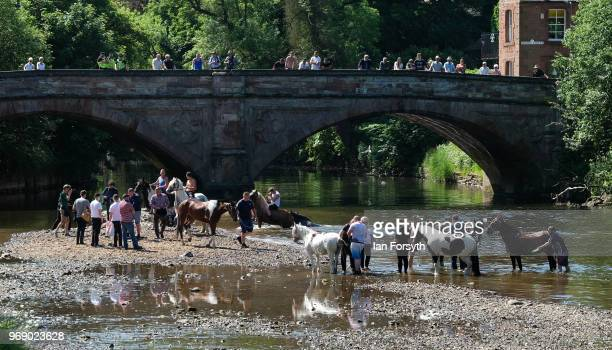 Horses are washed in the river Eden on the first day of the Appleby Horse Fair on June 7 2018 in Appleby EnglandThe fair is an annual gathering for...