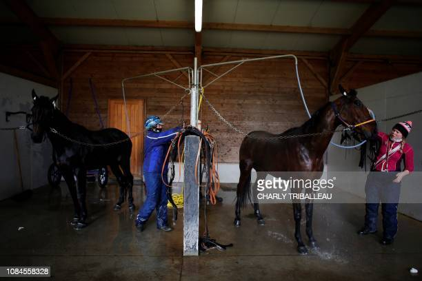 Horses are washed in their box on January 18 2019 in Mortrée northwestern France