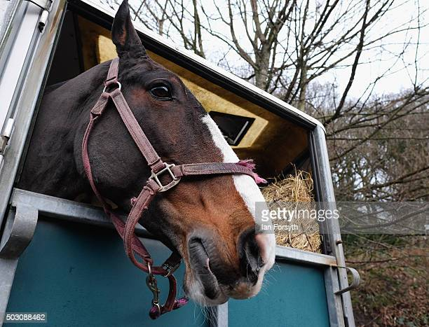 Horses arrive as the Cleveland Hunt prepares to ride out on the traditional New Year's Day hunt on January 1, 2016 in Guisborough, United Kingdom....
