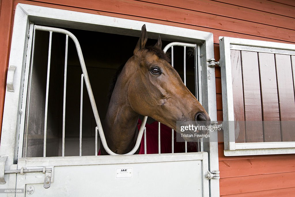 Horses arrive at the stables as the finishing touches are added ahead of Royal Ascot 2014 at Ascot Racecourse on June 16, 2014 in Ascot, England.