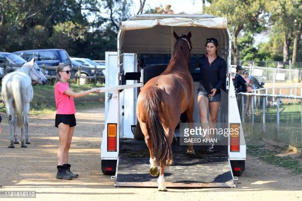 Horses arrive to take shelter from bushfires at the Frenchs Forest showgrounds in Sydney on November 12 2019 A state of emergency was declared on...