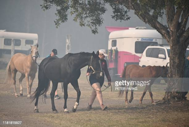 Horses arrive to take shelter from bushfires at the showgrounds in Taree 350km north of Sydney on November 12 2019 A state of emergency was declared...