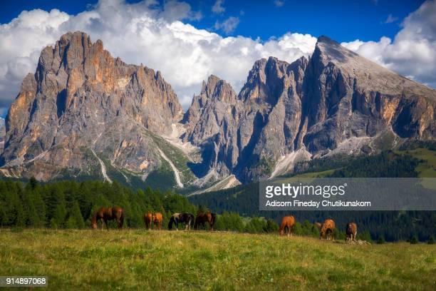 Horses at Alpe di Siusi  , South Tyrol, Italy