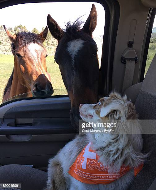 Horses At Dog Through Car Window