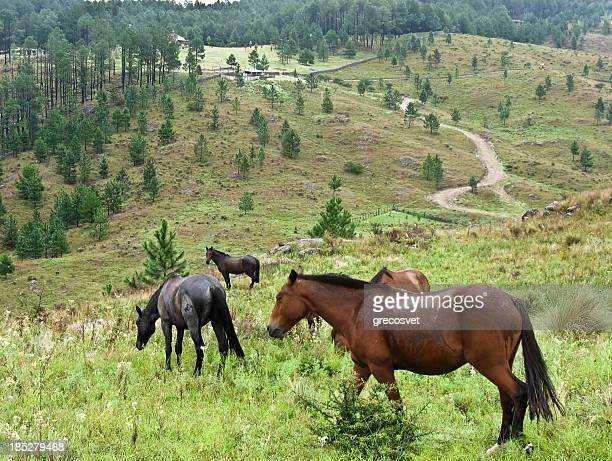caballos en hills - cordoba argentina fotografías e imágenes de stock